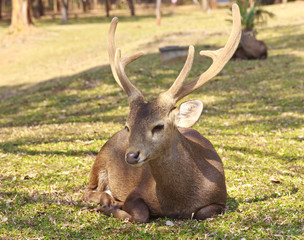 Red deer on a forest marge