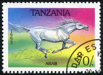 stamp printed in Tanzania shows Arab horse