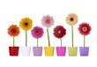 Reihe Gerbera Blumen in bunten Übertöpfen