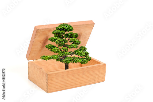 The tree is going out of the wooden box isolated white backgroun