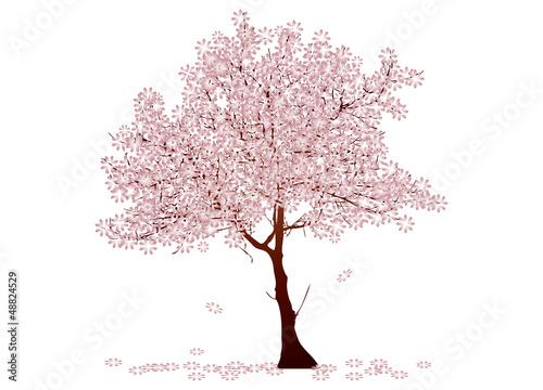 Kirschbaum in der Blüte