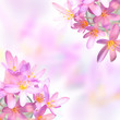 Saffron crocus flowers on colorful blurred background