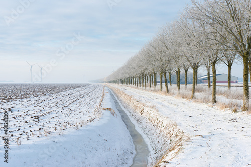 Snowy trees along a field in winter