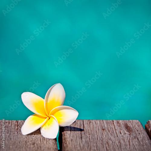 Frangipanier, fond piscine turquoise carré