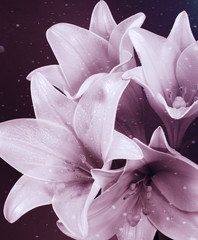beauty flowers card background