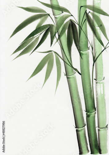 Papiers peints Bambou Watercolor painting of bamboo