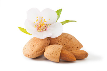 Almond with flower
