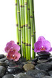 bamboo grove and pink orchid on pebble