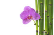 Macro of orchid and green bamboo grove