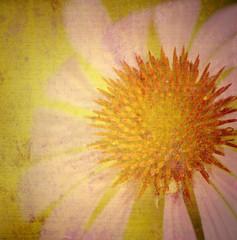 grunge daisy
