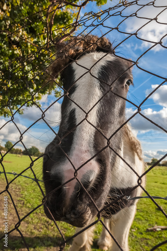 distorted head of a pony behind wire fencing