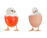Fototapety Zwei Küken im Ei
