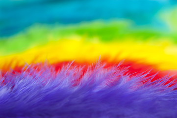 Colorful feathers background macro