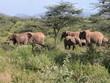 Troupeau éléphants Kenya