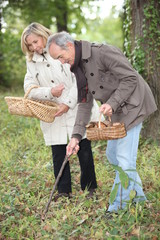 Middle-aged couple gathering mushrooms