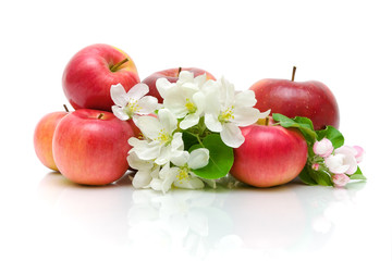 apple flowers and red apples on a white background