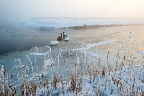 Swans on ice in a canal at dawn