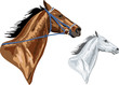 two horse heads - brown with bridle and white