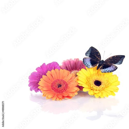 Frühlings/Sommerdekoration mit Gerbera und Schmetterling
