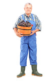 Full length portrait of a vintner holding a bucket of grapes