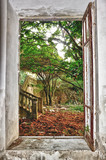 garden through the window - 48869782