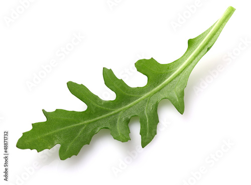 Ruccola leaf in closeup