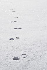 tracce di cane nella neve