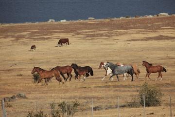 Patagonien Gauchos