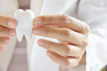 dentist holding molar ,dental concept