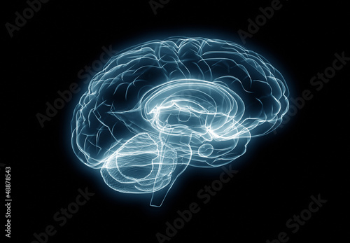 X-ray human brain