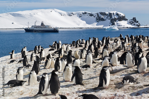 Tuinposter Pinguin Kolonie von Zügelpinguinen auf Half Moon Island