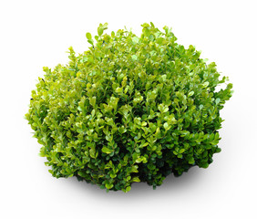 Fresh plant on white background