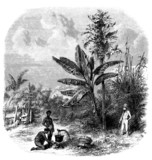 Tropical Scene - 19th century