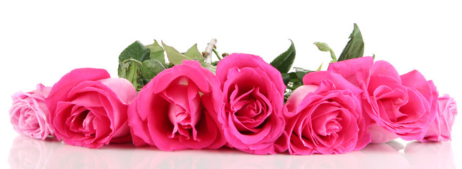 Beautiful pink roses close-up isolated on white