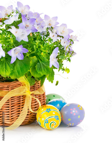 easter eggs with spring flower in basket isolated on white