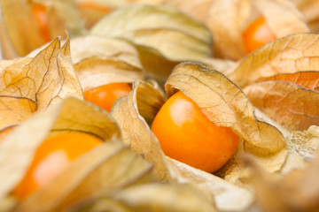 physalis closeup