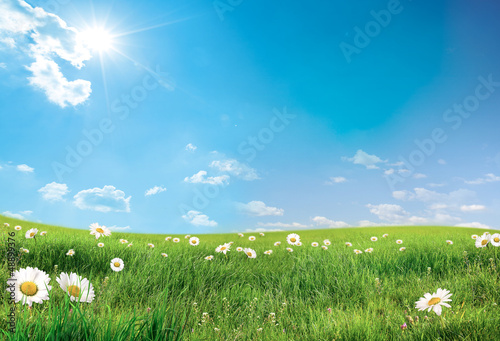 landscape with flowers - 48899376