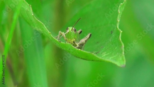 Close up of grasshopper sitting on leaf