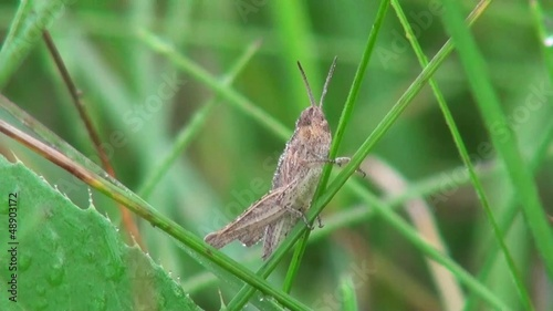 Grasshopper sitting in the grass