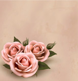 Retro background with beautiful pink roses with buds. Vector ill