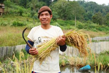 thai man farmer in the paddy rice field