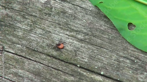 little mites crawling in the woods