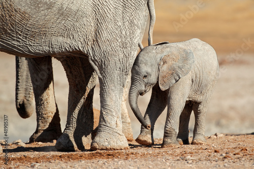 African elephant calf, Etosha National Park