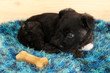 Cute puppy lying with bone on rug