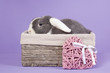 Mini-lop rabbit in basket