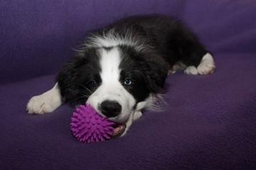 Das ist mein Ball