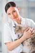 Veterinarian holding and calming a cat at clinic