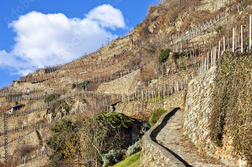 Stone road between empty vineyards in winter, Valtellina