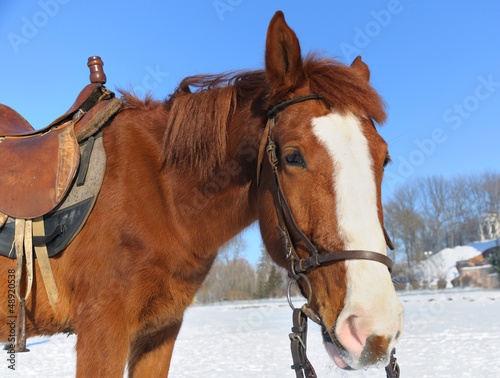 Portrait of nice horse  on a snow
