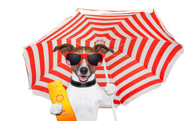 Dog summer sunscreen